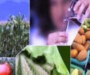 أهمية التقنية الحيوية في تحقيق الأمن الغذائي